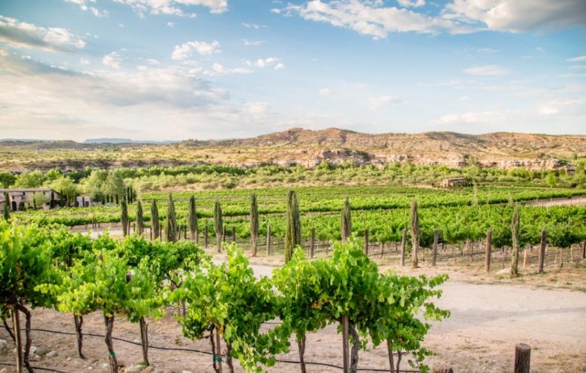 Explore the  Wine Country of Northern Arizona